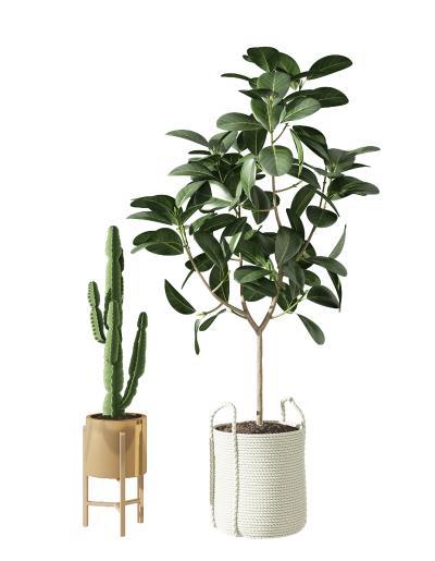 現代植物組合 仙人掌