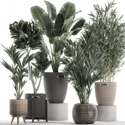 现代盆栽 绿植