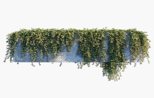 现代绿植藤蔓 植物墙