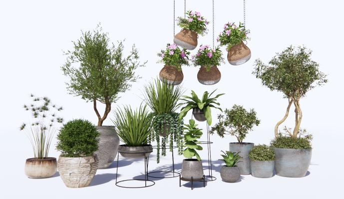 现代绿植盆栽 吊篮 盆景