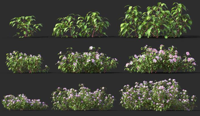 现代灌木花草植物