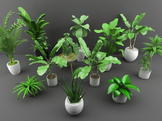 北欧植物组合