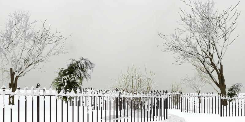 现代植物 雪景