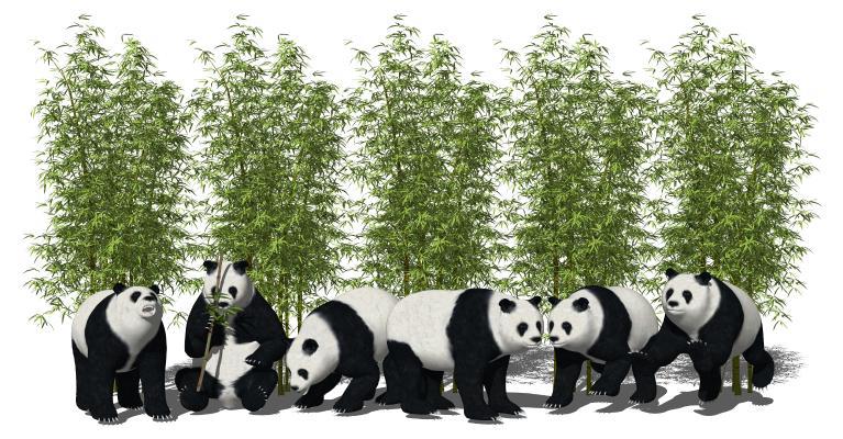 现代大熊猫 竹子