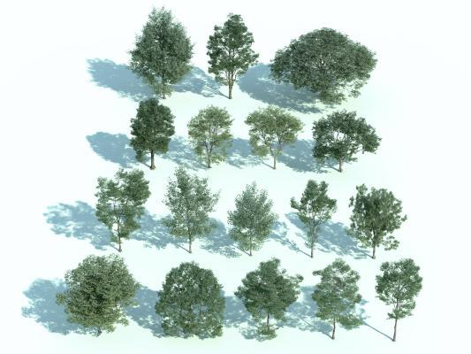 现代常绿树 绿树