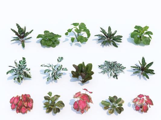 现代花草花卉 植物 灌木