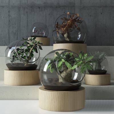现代盆栽 植物 摆件