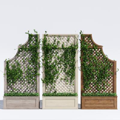 现代藤蔓绿植