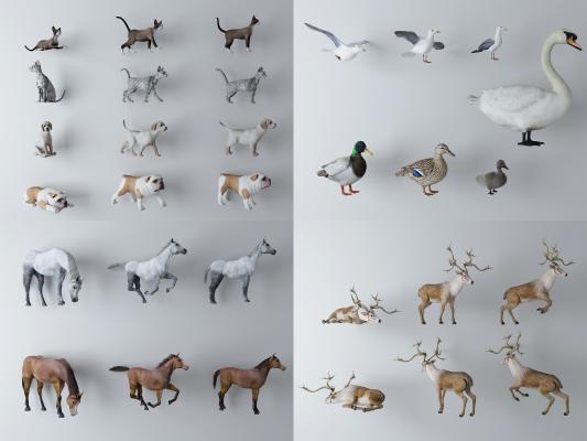 现代动物组合 狗 猫