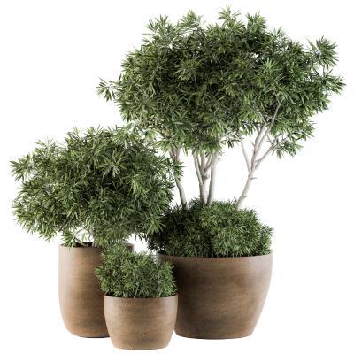 现代植物 盆栽 盆景