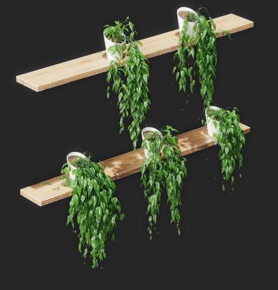现代植物盆栽 吊兰