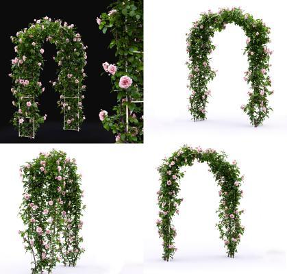 现代植物花卉 植物门