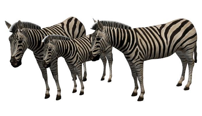 现代斑马动物