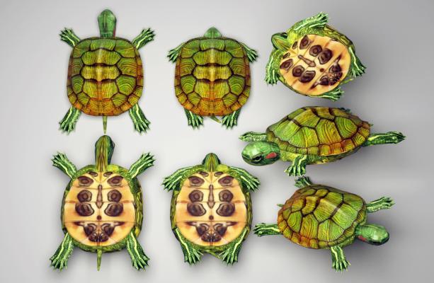 现代乌龟 巴西红耳龟