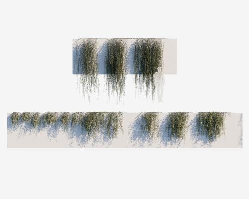 现代植物墙 绿植縢蔓