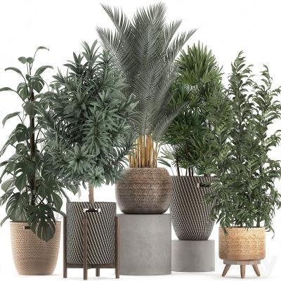 現代綠植盆栽擺件