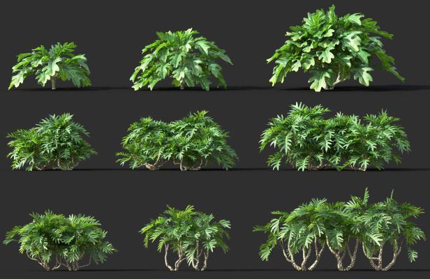 现代灌木植物