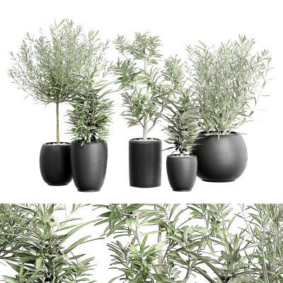 �F代盆栽盆景 植物