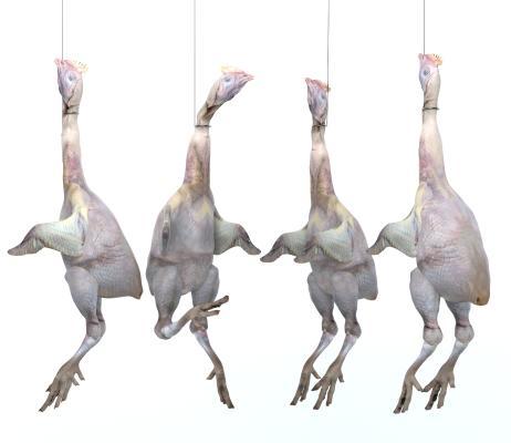 现代三黄鸡 鸡肉