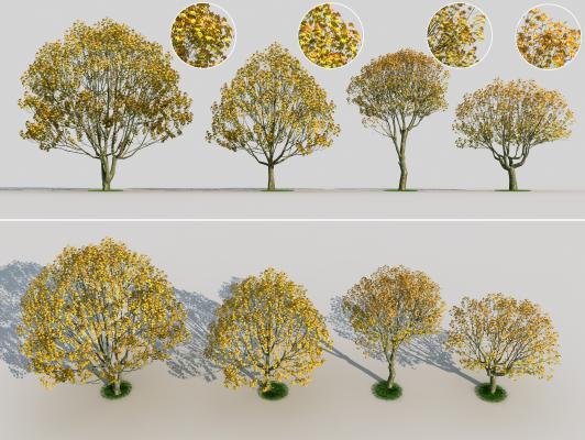 现代梧桐树 景观树 树子