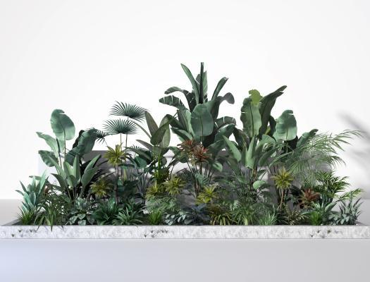 现代灌木 芭蕉