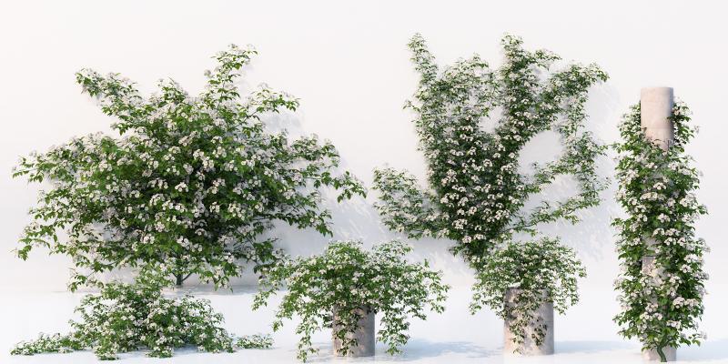 现代藤蔓 景观植物 花草