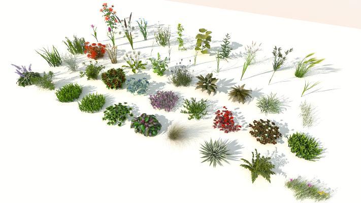 现代室外花草组合 花草 花卉