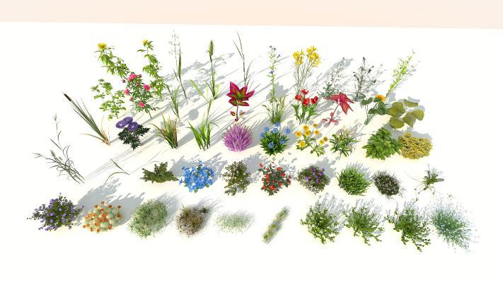 现代室外花草组合
