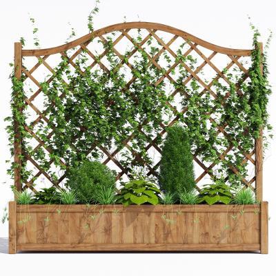 廊架花架园林植物