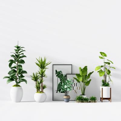 现代绿植花艺盆栽 现代绿植 花艺 盆栽 花盆 植物