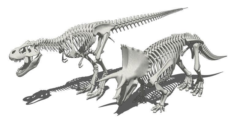 现代恐龙 化石 恐龙骨架