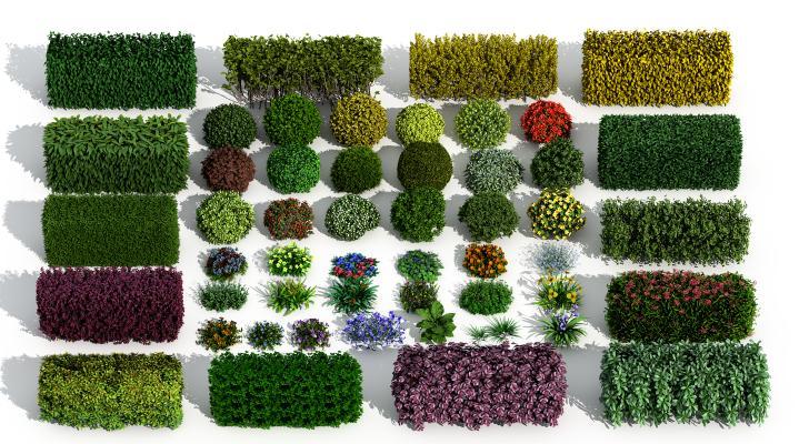 现代景观绿篱 灌木 花草
