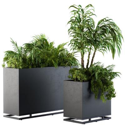 现代植物 盆栽 种植箱 花坛