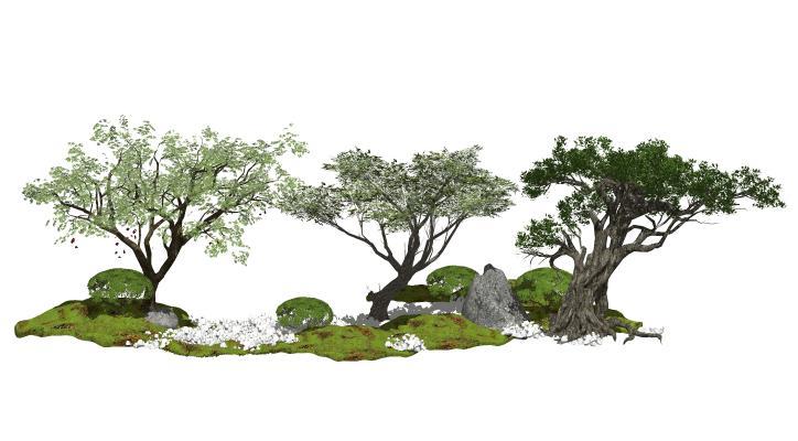 现代景观树 榕树 乔木植物