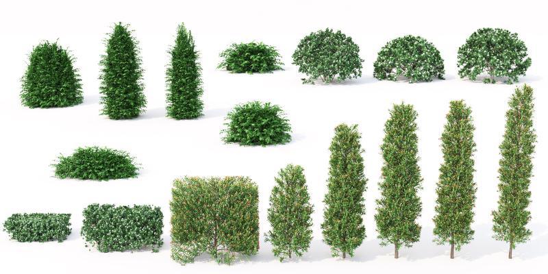 树木 灌木 绿篱