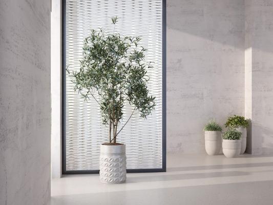 現代植物 盆栽 盆景組合