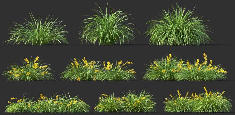 现代花草植物