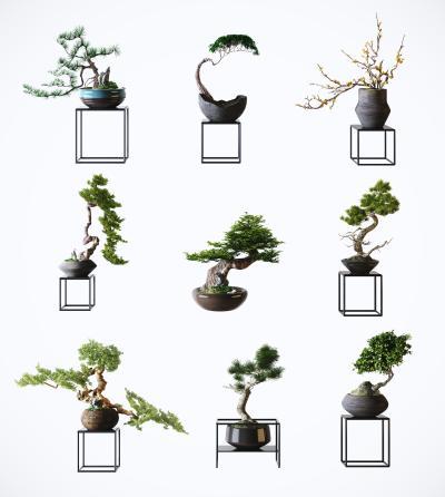 新中式风格植物盆栽