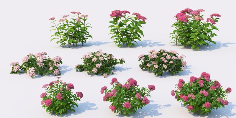 花草 植物 绿植
