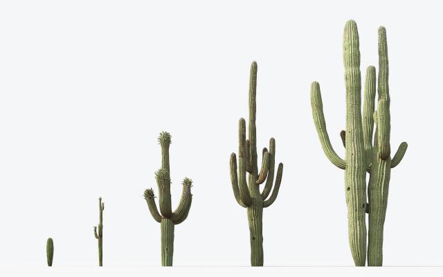 现代植物仙人掌