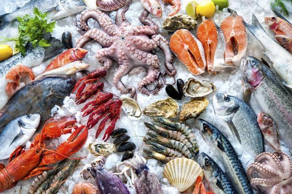 现代水生动物 货架 海鲜