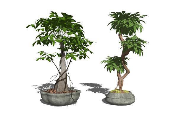 中式盆栽植物组合