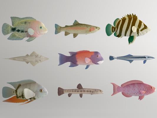 现代金鱼 鱼