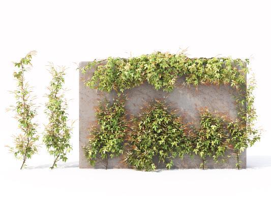 现代花草花卉 藤蔓 爬藤