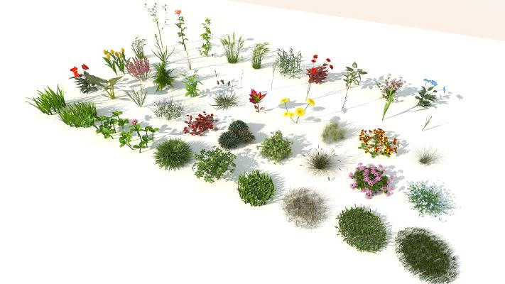 现代室外50棵精品花草组合