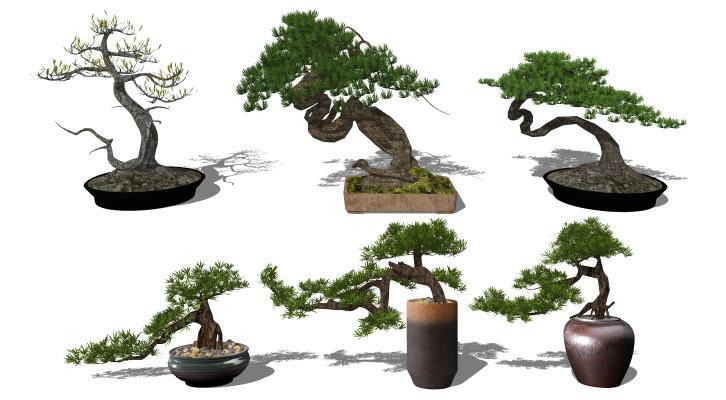 新中式松树盆景 迎客松盆栽 松树植物花盆