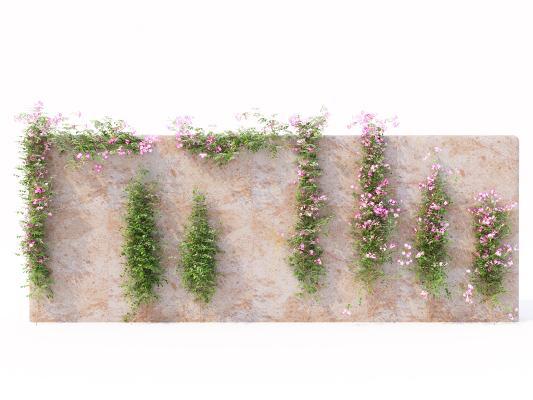 现代绿植墙 藤蔓 花卉