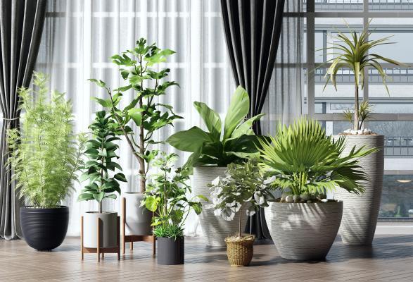 现代绿植 盆栽组合