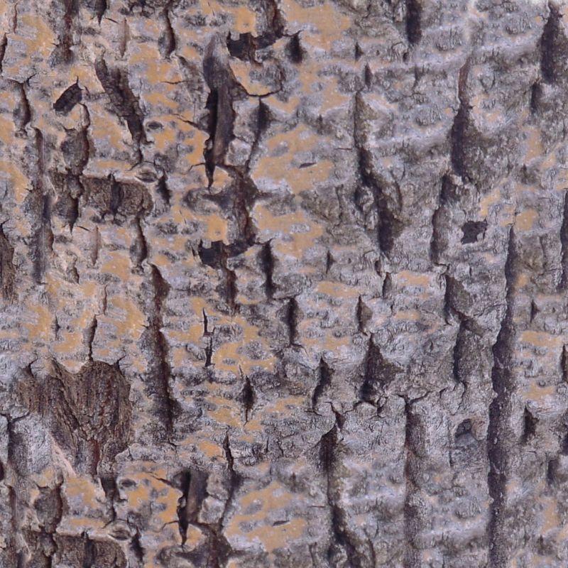 木纹木材-树皮 107